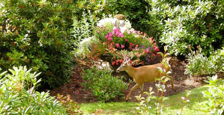 Buck at Redwood Cottage